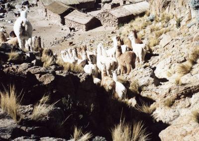 Foto argentina 3