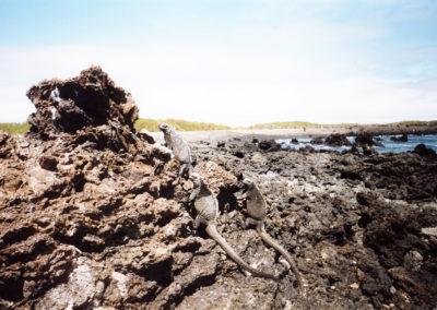 Foto Galapagos 5
