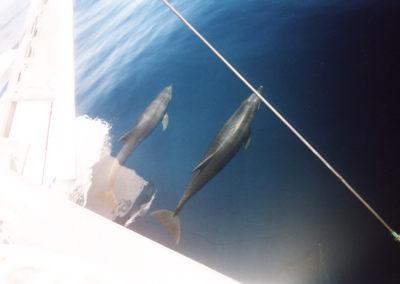 Foto Galapagos 6